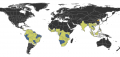 Centromyrmex Distribution.png