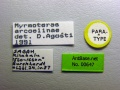 Myrmoteras-arcoelinae-label-am.jpg