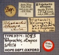 Polyrhachis atropos holotype labels-AntWiki.jpg