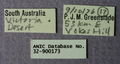 Melophorus eumorphus minor labels ANIC32-900173.JPG