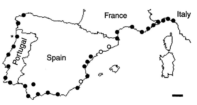 File:Giraud, T., Pedersen, J.S. et al. 2002. Fig. 1.jpg