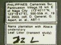 Plagiolepis-species1Label.jpg