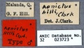 Aenictus hilli HT ANIC32-023723 labels-Antwiki.jpg