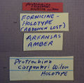 Protrechina carpenteri holotype labels.JPG