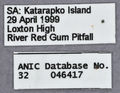 Melophorus rufoniger media labels ANIC32-046417.jpg
