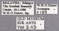 Polyrhachis olybria queen labels.jpg