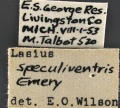 Lasius-speculiventris-MCZ001Label.jpg