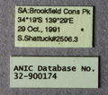 Melophorus sericothrix minor labels ANIC32-900174.JPG