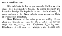 Emery 1898 p. 143.png