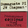 Pristomyrmex-collinusLabel.jpg